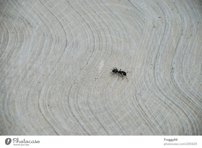 Black Animal Gray Environment Wild animal Individual Crawl Endurance Diligent Ant Single-minded Insect