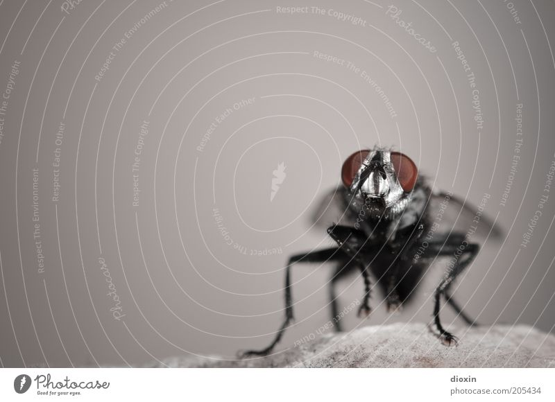 Nature Red Black Animal Gray Stone Legs Wait Small Fly Rock Sit Animal face Wing Insect Copy Space left