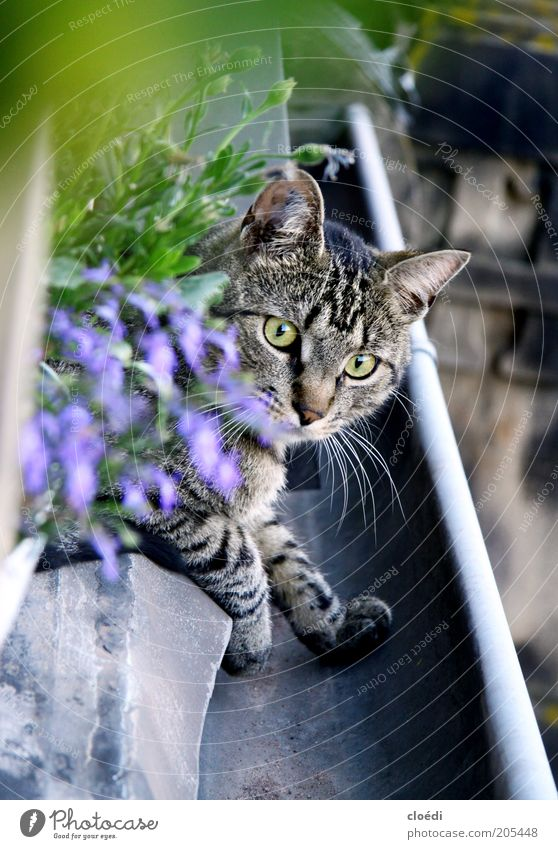 beautiful rain gutter Relaxation Pet Cat Pelt 1 Animal Observe To enjoy Hunting Elegant Cute Soft Brown Gray Black White Contentment Ease Calm Domestic cat Paw