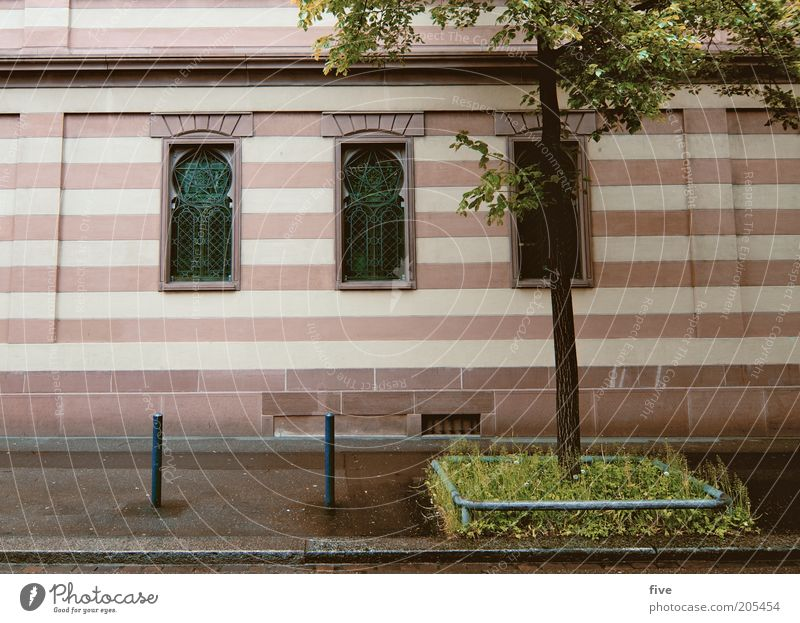 streak Plant Tree Grass Town House (Residential Structure) Facade Window Stripe Curbside Colour photo Exterior shot Deserted Day Light Wide angle Striped
