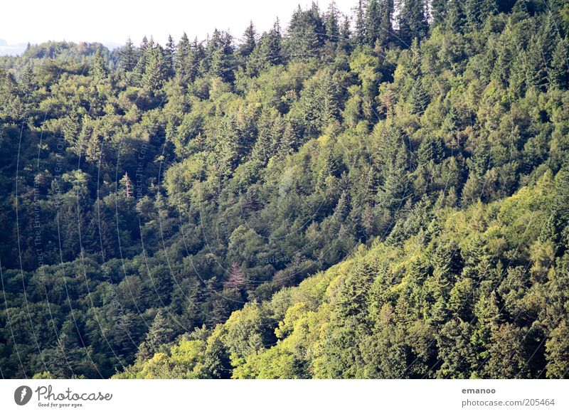 Nature Tree Green Summer Vacation & Travel Calm Forest Dark Relaxation Mountain Freedom Landscape Environment Tall Trip