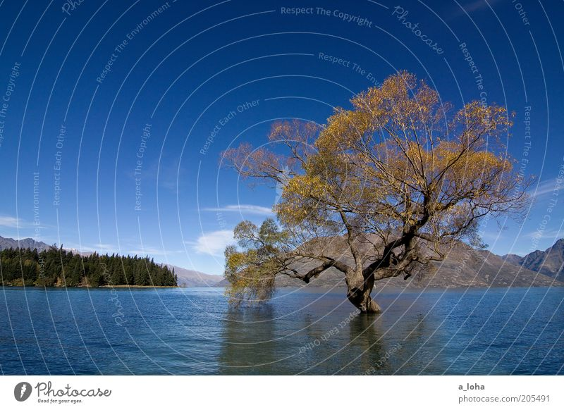Water Old Sky Tree Blue Clouds Loneliness Far-off places Autumn Mountain Lake Landscape Power Wait Glittering Wet
