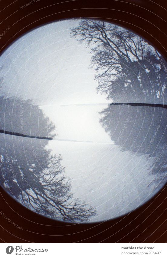 Twisted Environment Nature Plant Sky Winter Climate Bad weather Fog Snow Forest Exceptional Dark Cold Double exposure Round Footpath Inverted Colour photo