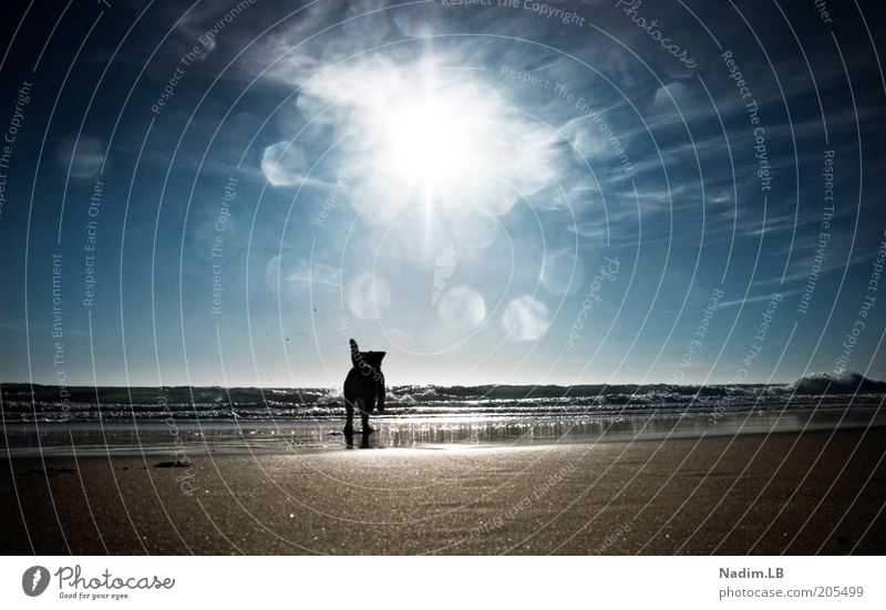 Water Sun Summer Beach Freedom Dog Sand Walking Free Running Joie de vivre (Vitality) Escape Beautiful weather Joy Romp Lens flare