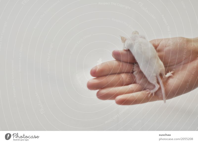 White Hand Fingers Pet Mouse Tails Fragile Rodent Diminutive