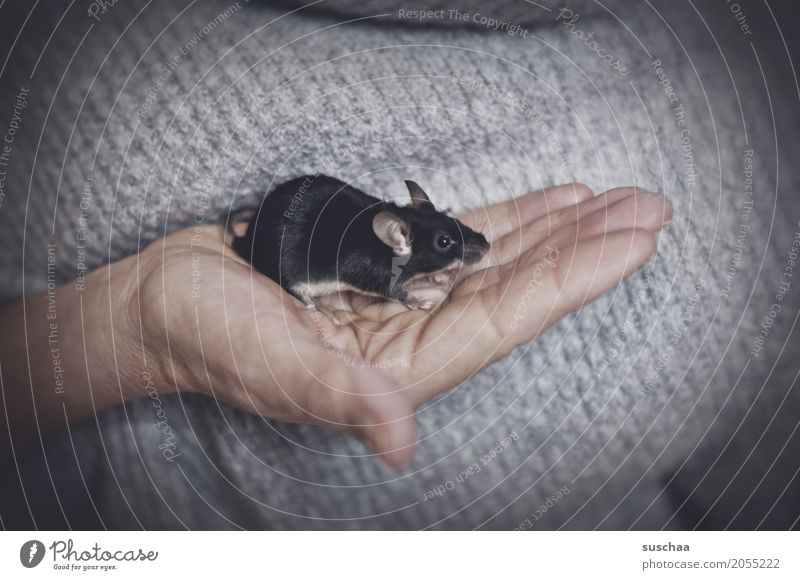 black mouse Hand Fingers Skin To hold on Mouse Rodent Mammal Black Pet Tails Protection Fragile timidly Diminutive Cute Sweet Disgust Fear