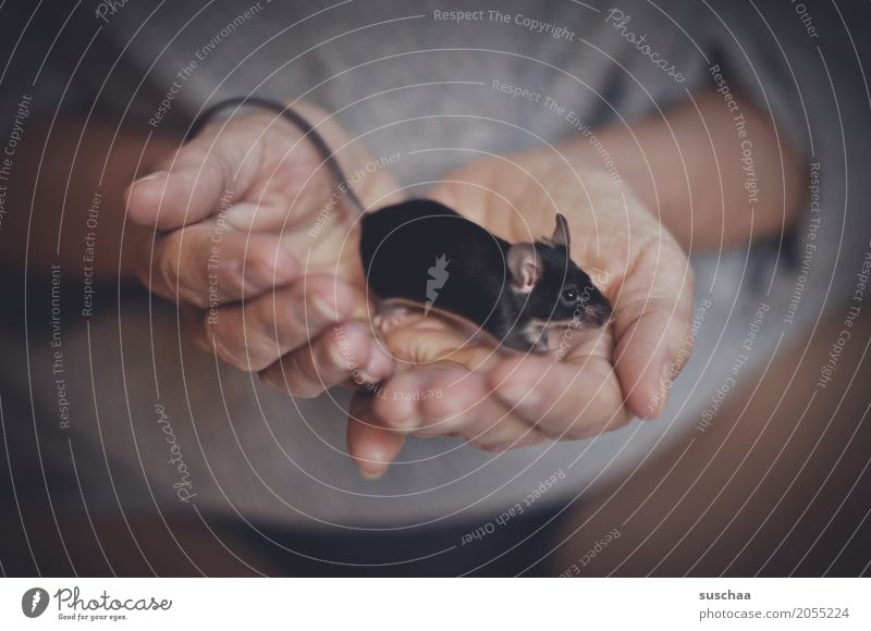 black mouse Hand Fingers Skin To hold on Odor Mouse Rodent Mammal Black Pet Tails Pelt Protection Fragile timidly Diminutive Cute Sweet Disgust Fear