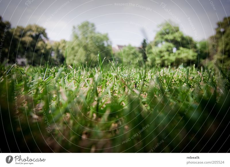 sward Summer Nature Plant Earth Grass Meadow Green Short Colour photo Exterior shot Close-up Knoll Lawn