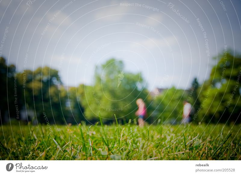 seat search Summer Couple 2 Human being Nature Landscape Beautiful weather Grass Park Meadow Green Exterior shot Copy Space top Blur Wide angle Knoll Lawn