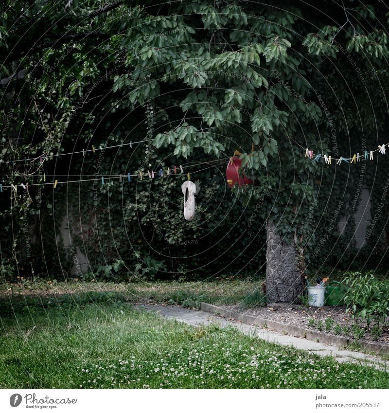 Nature Tree Green Plant Dark Grass Garden Gray Gloomy Lawn Rope Clothesline Holder Clothes peg Photos of everyday life