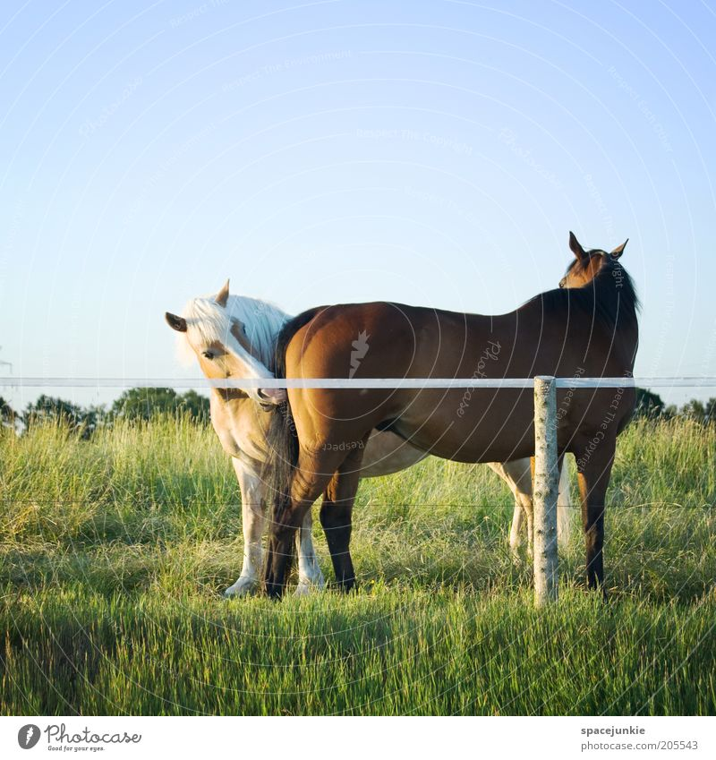Nature Green Beautiful Animal Meadow Together Pair of animals Natural Horse Curiosity Touch Pasture Odor Interest Infatuation Pony