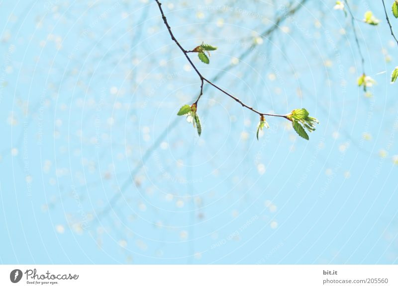 Sky Nature Green Blue Plant Summer Leaf Environment Spring Air Growth Branch Blossoming Beautiful weather Bud Twig