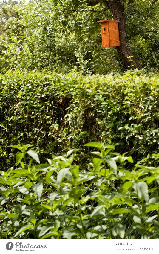 strong box Birdhouse Garden Garden plot Garden allotments Hedge Green Leaf Leaf green Plant Tree Tree trunk Incubator Nesting box Domicile