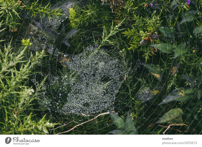 patch of grass Nature Plant Water Grass Moss Leaf Blossom Wild plant Meadow Fresh Green Damp Spider's web Thorn Drop Colour photo Subdued colour Exterior shot