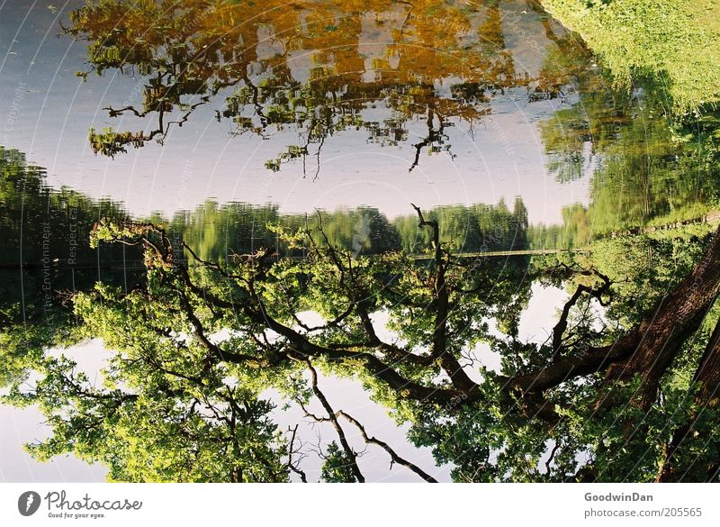 Mirror, mirror Environment Nature Elements Earth Water Sky Plant Tree Park Lakeside Bright Beautiful Warmth Brown Gold Green Moody Colour photo Exterior shot
