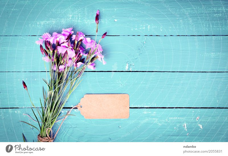 bouquet of pink carnations with a paper tag Flower Paper Bouquet Wood Feasts & Celebrations Bright Blue Pink Dianthus caryophyllus Top blooming background board