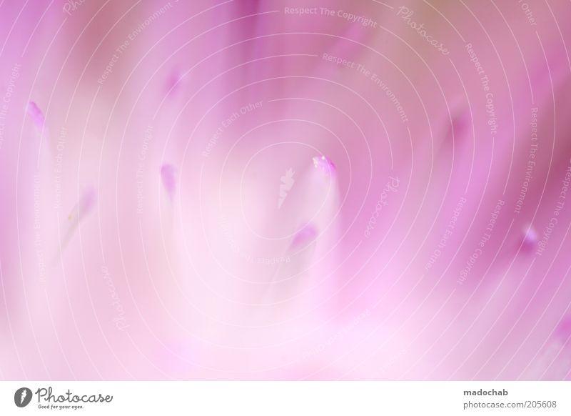 pink panic Harmonious Calm Nature Plant Flower Blossom Esthetic Colour Inspiration Soft Pink Delicate Color gradient Blur Abstract Colour photo Multicoloured