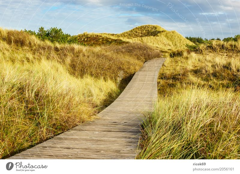 Landscape in the dunes on the island of Amrum Relaxation Vacation & Travel Tourism Island Nature Clouds Autumn Tree Bushes Forest Coast North Sea Lanes & trails