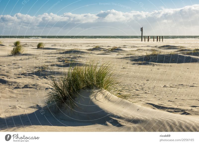 Landscape in the dunes on the island of Amrum Relaxation Vacation & Travel Tourism Beach Ocean Island Nature Sand Clouds Autumn Coast North Sea Blue Yellow Dune