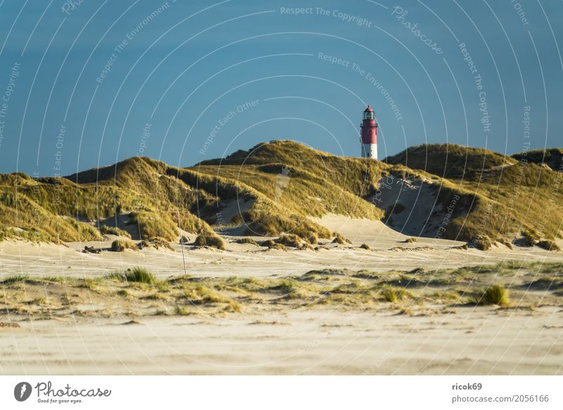 Landscape in the dunes on the island of Amrum Relaxation Vacation & Travel Tourism Island Nature Clouds Autumn Coast North Sea Lighthouse Tourist Attraction