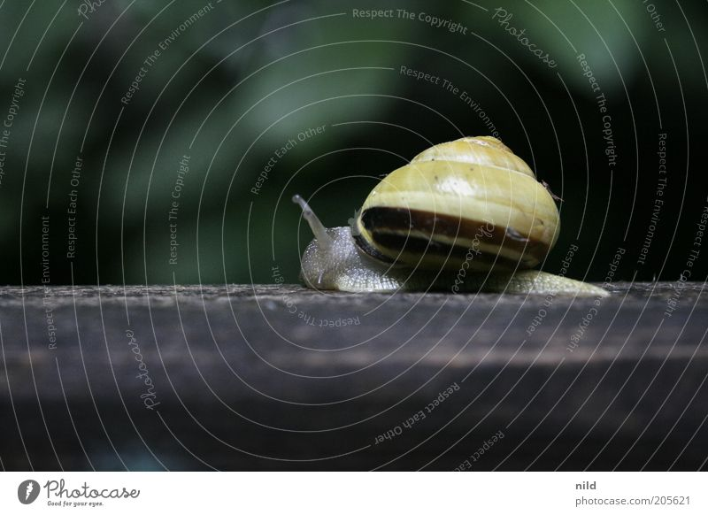 where to in such a hurry? Environment Nature Animal Snail Snail shell 1 Movement Yellow Slowly Colour photo Exterior shot Macro (Extreme close-up)