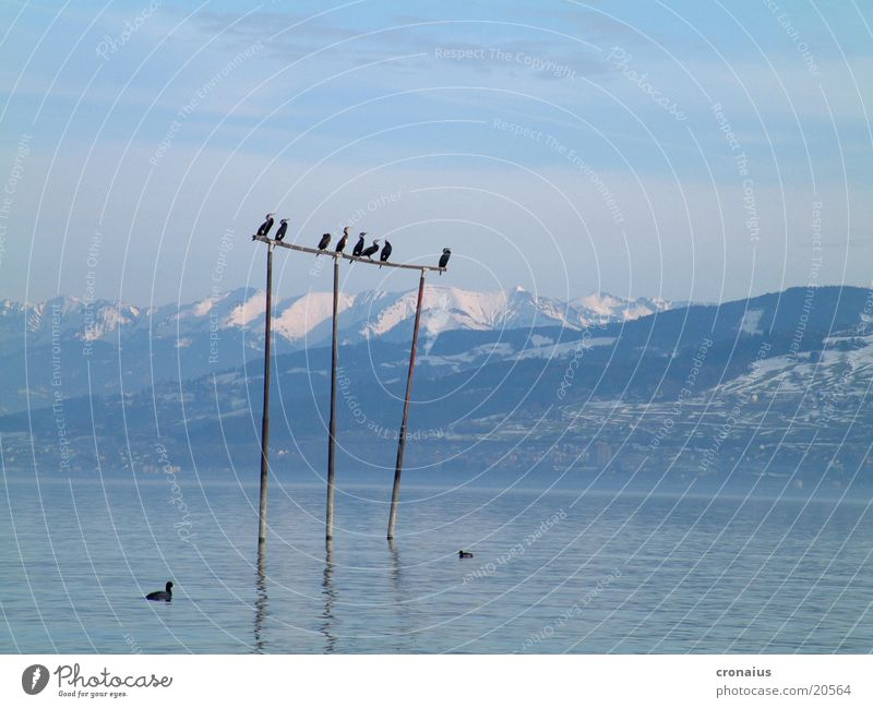 high up Snow Lake Mountain waterfowl