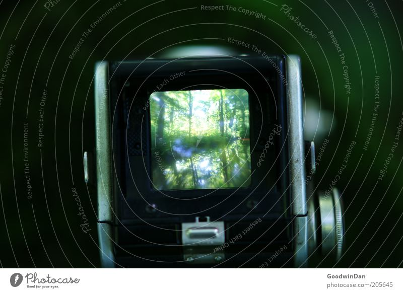 Nature Water Tree Green Plant Forest Photography Environment Camera Screen Elements Take a photo Photographic technology Water reflection Picture-in-picture
