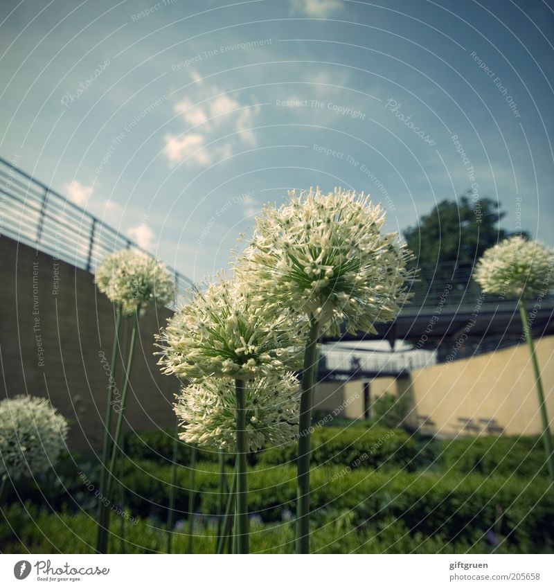 lots of dots Sky Clouds Plant Flower Bushes Blossom Foliage plant Garden Park Deserted Wall (barrier) Wall (building) Large Modern Landscaping Horticulture