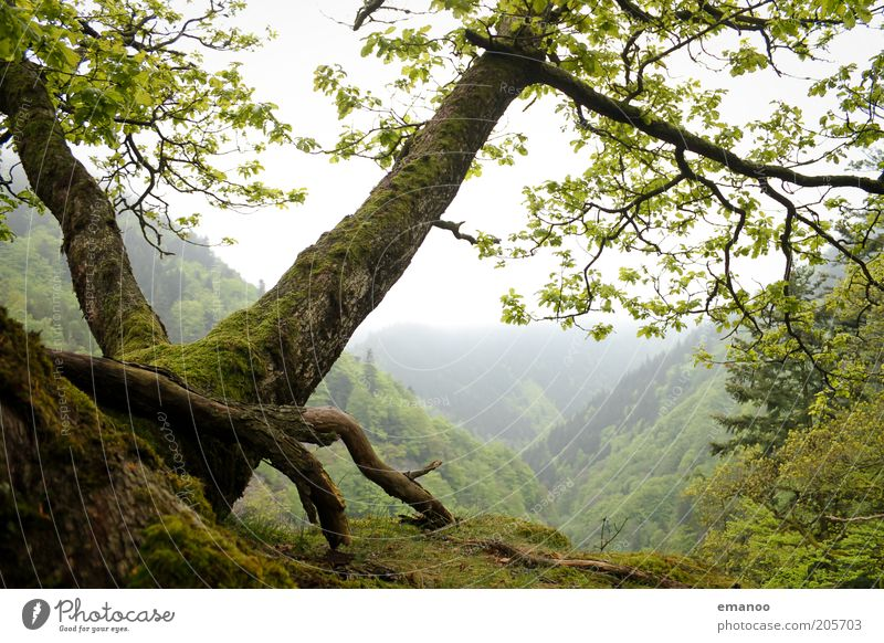 Nature Green Tree Plant Summer Vacation & Travel Forest Freedom Mountain Landscape Environment Weather Earth Wet Trip Fog