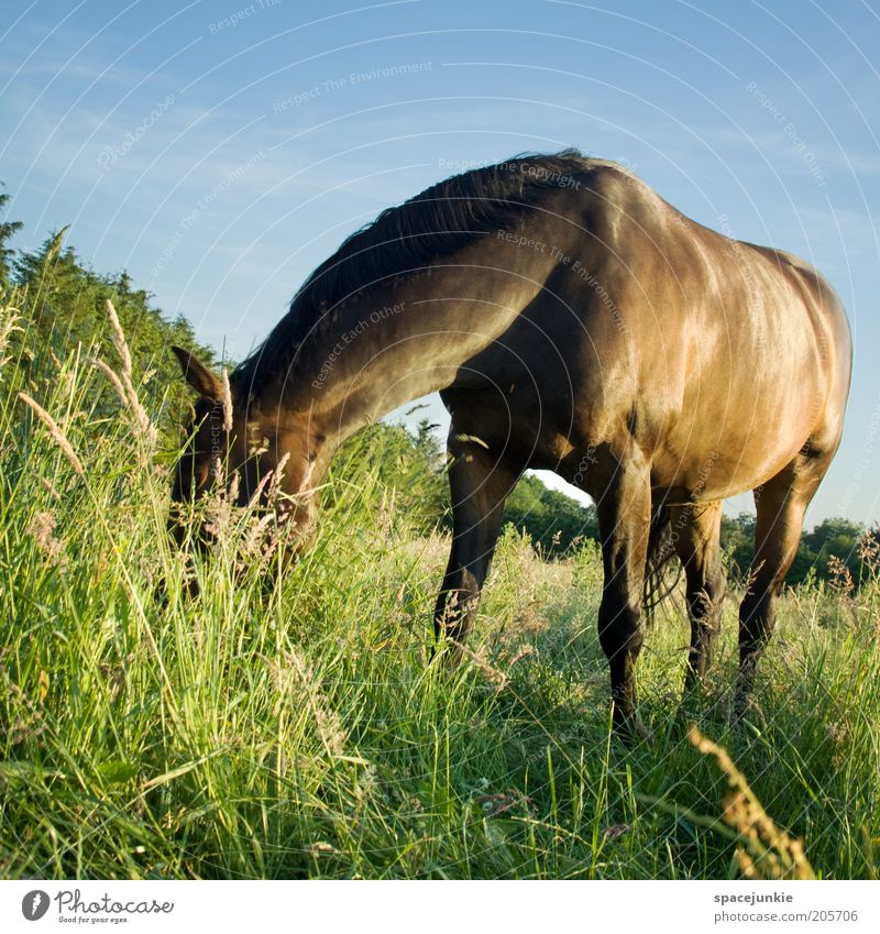 Beautiful Sky Summer Meadow Grass Landscape Glittering Elegant Horse Pelt Curiosity Pasture Odor To feed Animal Mane