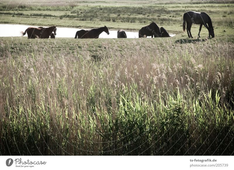 Nature Water Green Plant Vacation & Travel Animal Meadow Grass Landscape Brown Environment Trip Horse Group of animals Natural Idyll