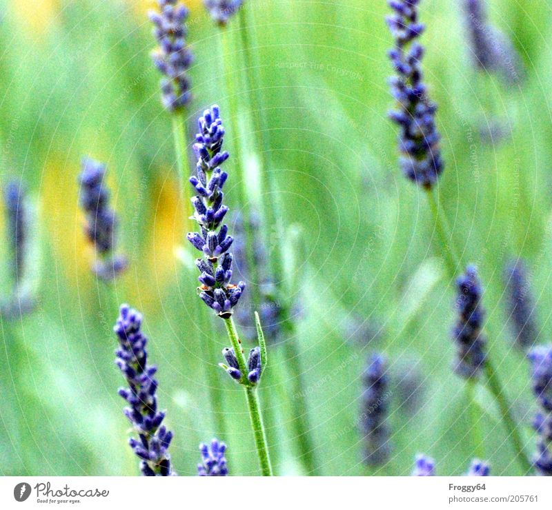 Nature Flower Green Blue Plant Summer Yellow Blossom Environment Fresh Violet Blossoming Agricultural crop Meadow flower Flowering plant