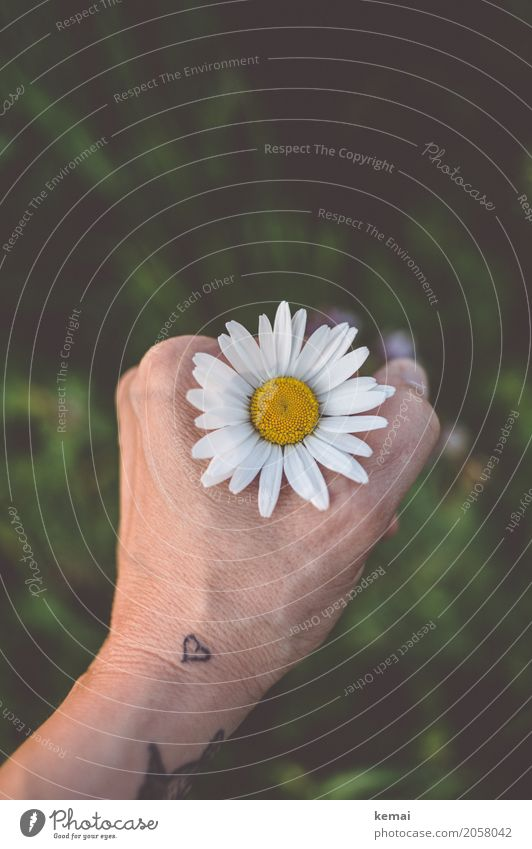 Through the flower, right into the heart (II) Style Wellness Harmonious Well-being Contentment Senses Relaxation Calm Freedom Summer Hand Tattoo Environment