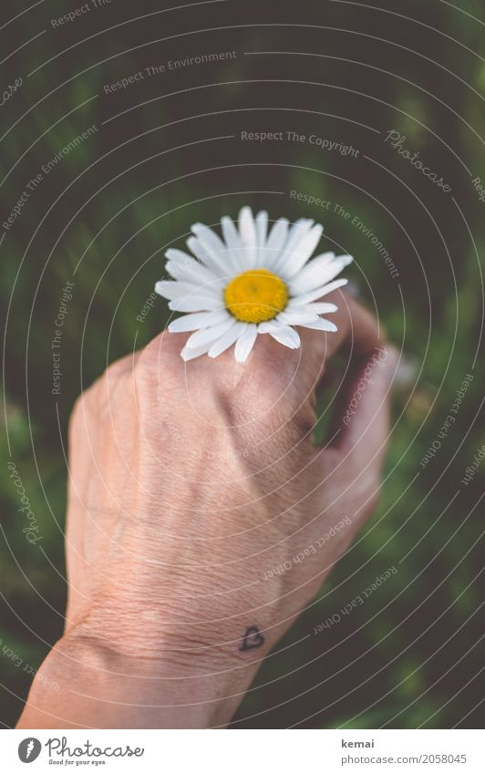 Human being Nature Plant Summer Beautiful Hand Flower Relaxation Calm Life Lifestyle Environment Blossom Meadow Freedom Leisure and hobbies