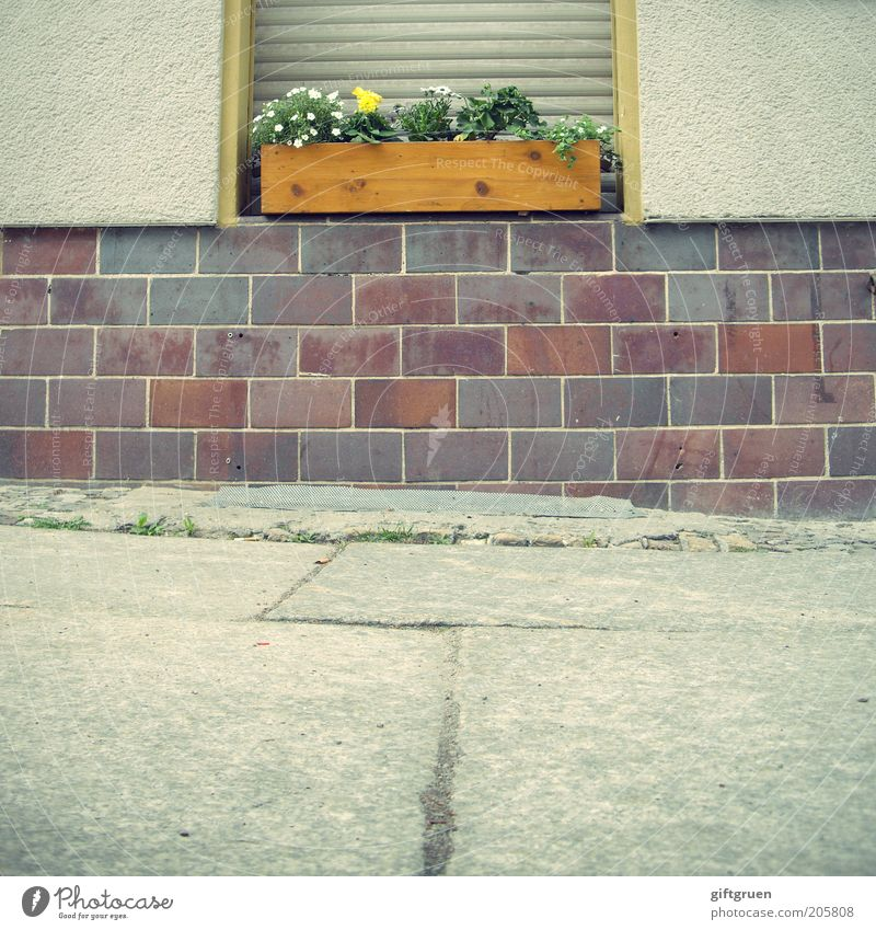 Flower House (Residential Structure) Wall (building) Window Wood Stone Wall (barrier) Germany Facade Arrangement Clean Brick Sidewalk Manmade structures Plaster