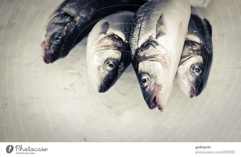 Nutrition Animal Gray Food Fresh Fish Silver Fish eyes Raw 4 Scales Fish market Protein Fish dish Fish head