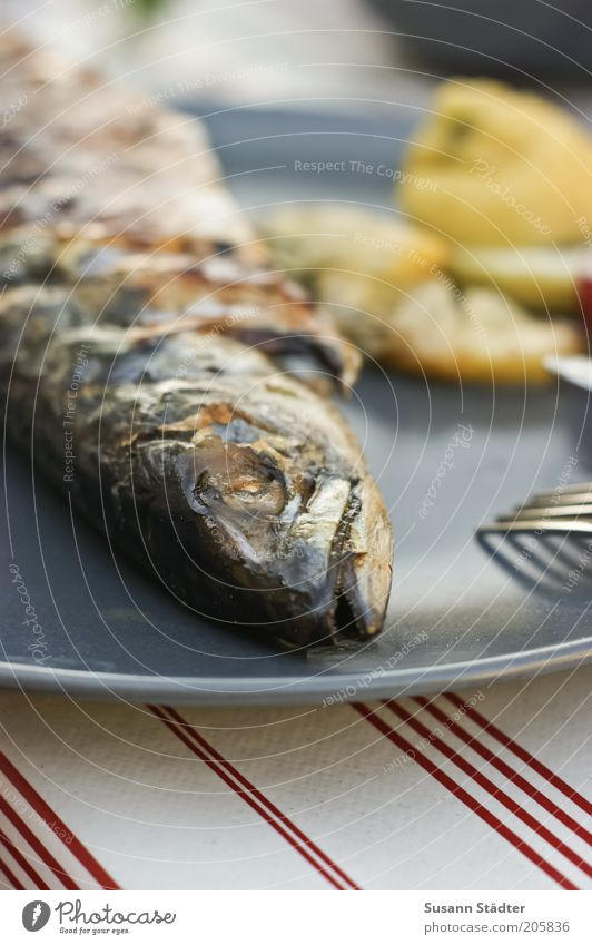 The end of a mackerel Food Fish Nutrition Dinner Banquet Slow food Plate Mackerel Piece of grilled fish Lemon Protein Close-up Detail Deserted