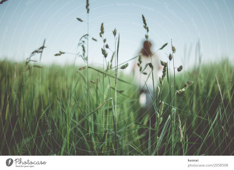 Human being Nature Plant Blue Summer Green Relaxation Calm Grass Exceptional Freedom Leisure and hobbies Field Adventure Joie de vivre (Vitality)