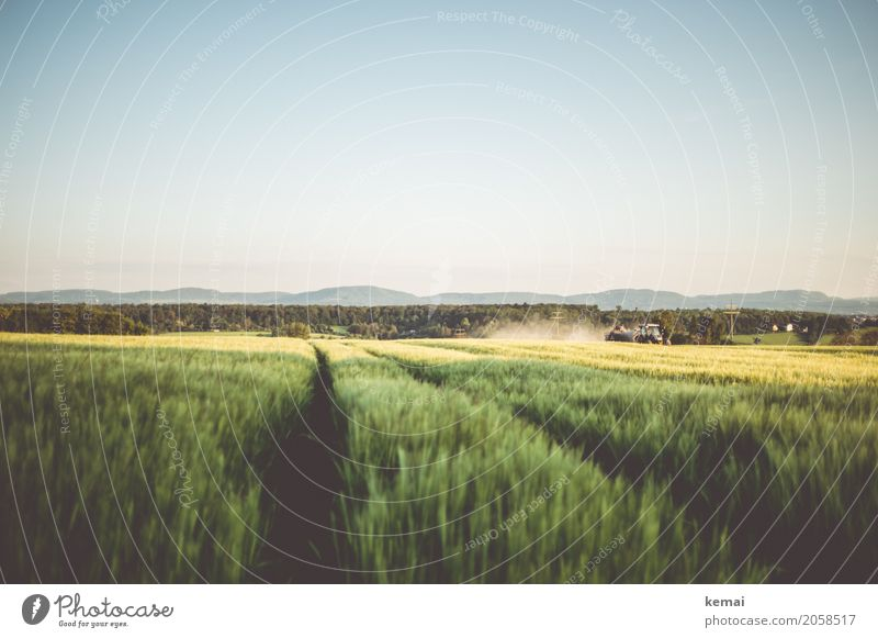 harvest Calm Trip Far-off places Freedom Environment Landscape Cloudless sky Summer Beautiful weather Agricultural crop Cornfield Grain field Barleyfield Hill