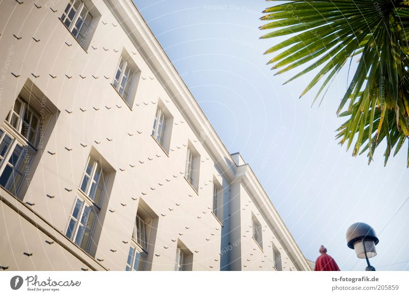 Hellraiser facade Far-off places Art Sky Cloudless sky Beautiful weather Plant Exotic Palm tree Palm frond Bremen Building Wall (barrier) Wall (building) Facade