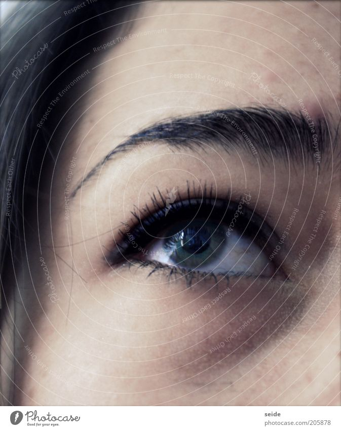admiring Feminine Young woman Youth (Young adults) Eyes Eyebrow 1 Human being Make-up Brunette Elegant Near Green Colour photo Interior shot Close-up Upward