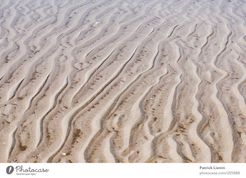 Nature Water Beach Landscape Line Coast Environment Wet Climate Tracks North Sea Environmental protection Caution Deception Mud Mud flats