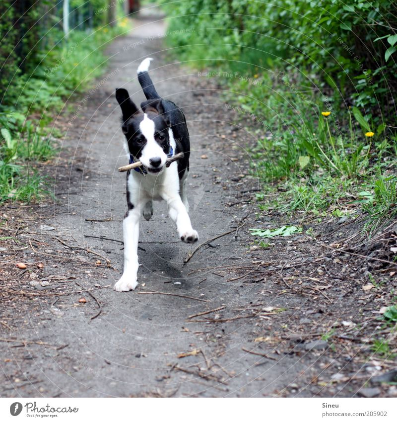 Dog Beautiful Joy Animal Lanes & trails Movement Happy Baby animal Earth Healthy Contentment Free Happiness Cute Beautiful weather Running