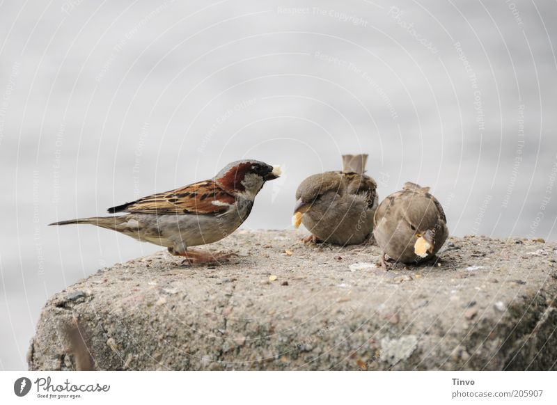 Franz, Hans and Erich Bird 3 Animal Observe To feed Feeding Free Cute Appetite Attachment Sparrow Feather Crumbs Breadcrumbs Colour photo Exterior shot Deserted