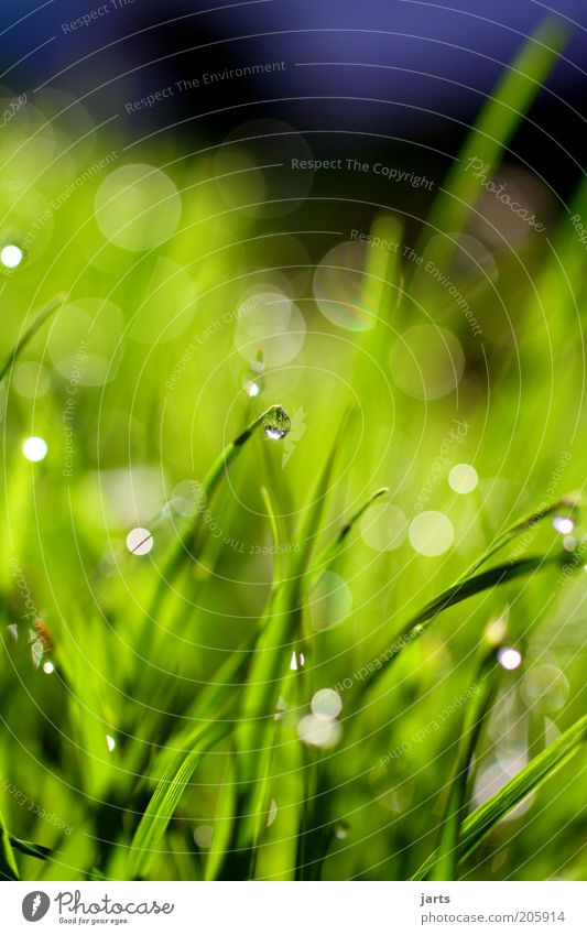Nature Green Summer Meadow Grass Spring Environment Drops of water Wet Fresh Blade of grass Foliage plant Plant Water Patch of light