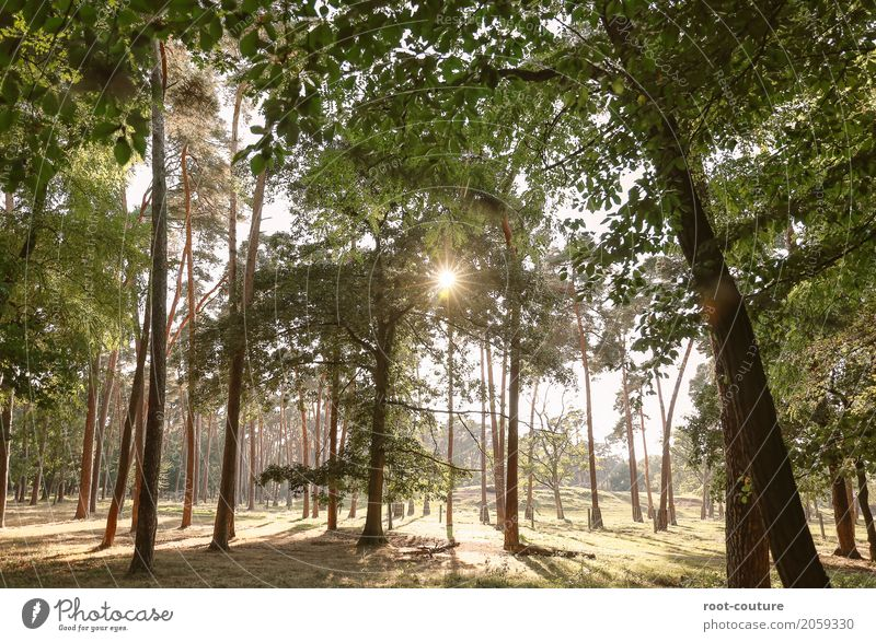forest run Environment Nature Landscape Plant Animal Earth Cloudless sky Sun Sunrise Sunset Sunlight Summer Beautiful weather Warmth Tree Leaf Foliage plant
