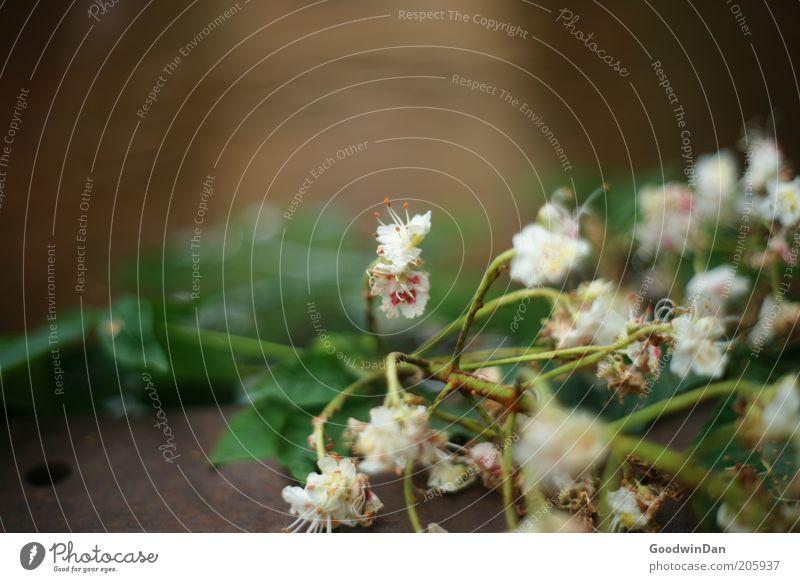 Nature Flower Plant Blossom Environment Near Elements
