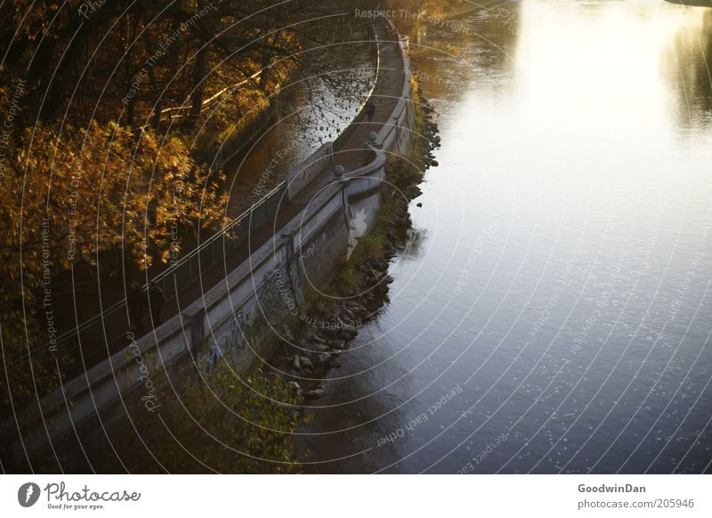Nature Water Tree Plant Autumn Emotions Park Moody Weather Environment Simple Footpath River bank Channel Autumnal Weir