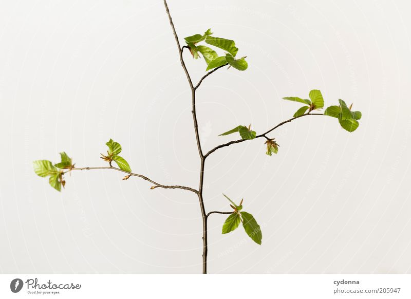 Simple Tree Beautiful Life Calm Nature Spring Plant Leaf Beginning Esthetic Uniqueness Elegant Sustainability Time Twigs and branches Growth Delicate Fragile