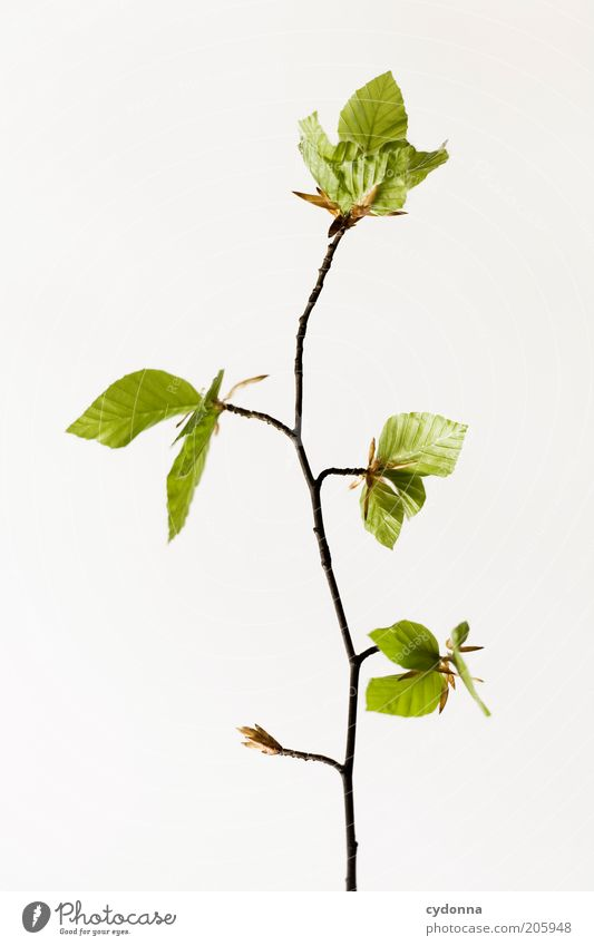 Simple Tree I Beautiful Life Calm Nature Spring Plant Leaf Beginning Esthetic Uniqueness Elegant Sustainability Growth Time Twigs and branches Delicate Fragile